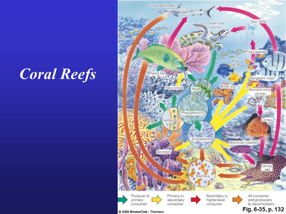 Coral Reefs Fig. 6-35, p. 132