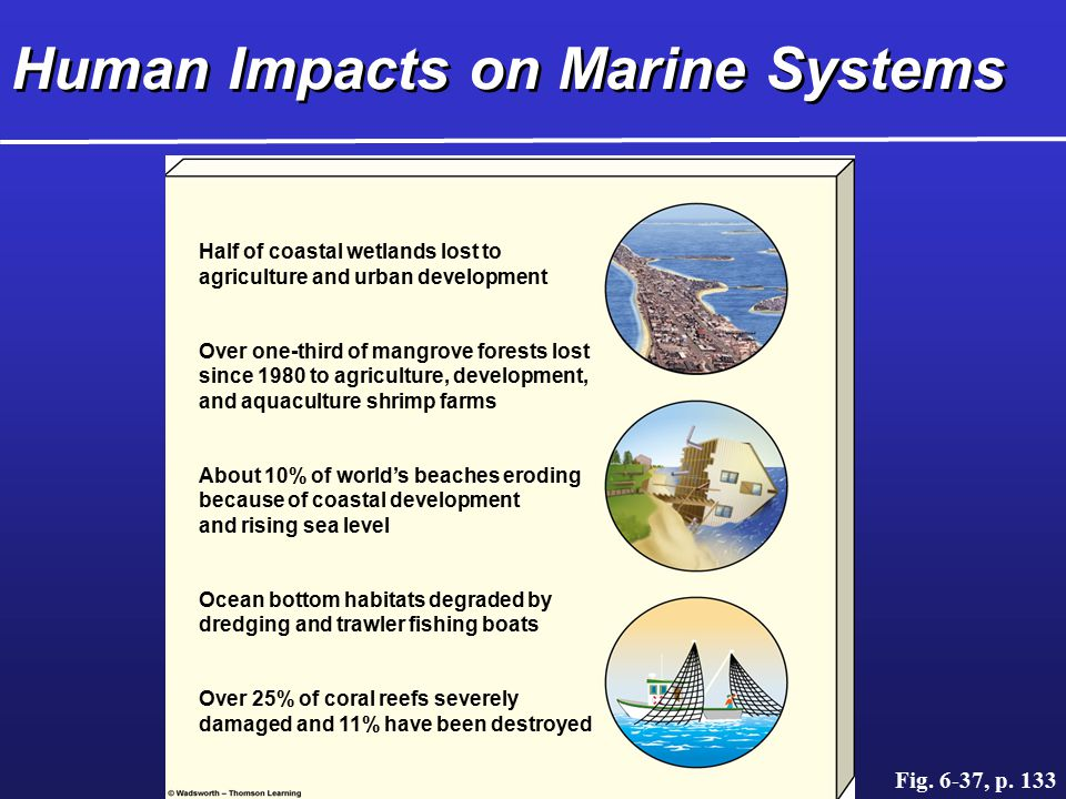 Human Impacts on Marine Systems