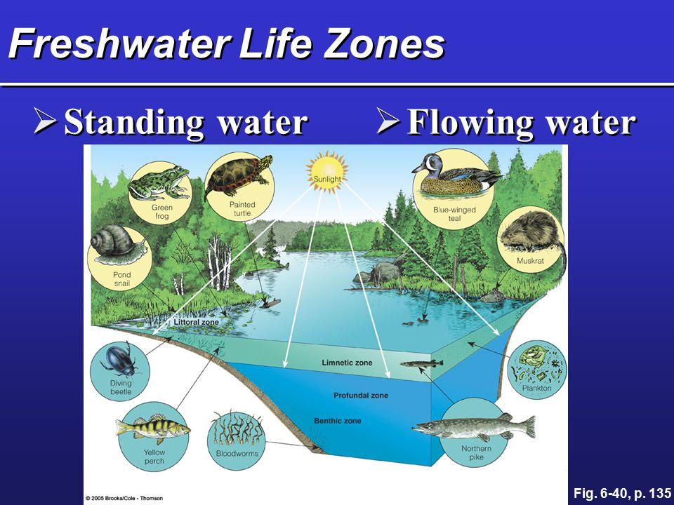 Freshwater Life Zones Standing water Flowing water Fig. 6-40, p. 135