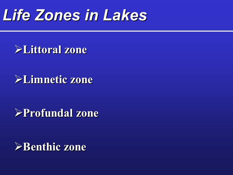 Life Zones in Lakes Littoral zone Limnetic zone Profundal zone