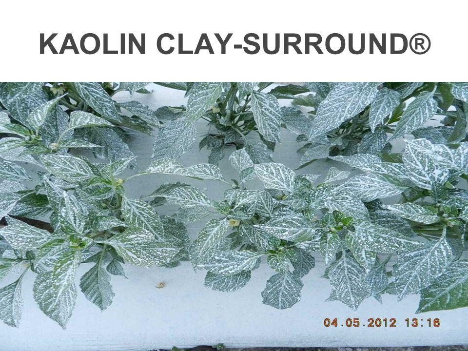 KAOLIN CLAY-SURROUND®