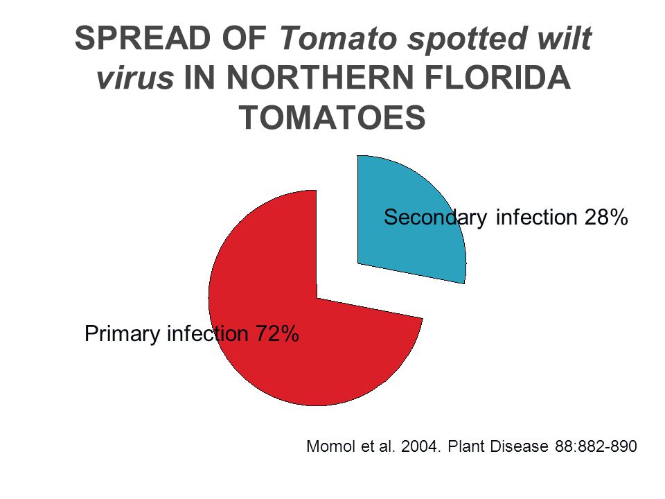 SPREAD OF Tomato spotted wilt virus IN NORTHERN FLORIDA TOMATOES