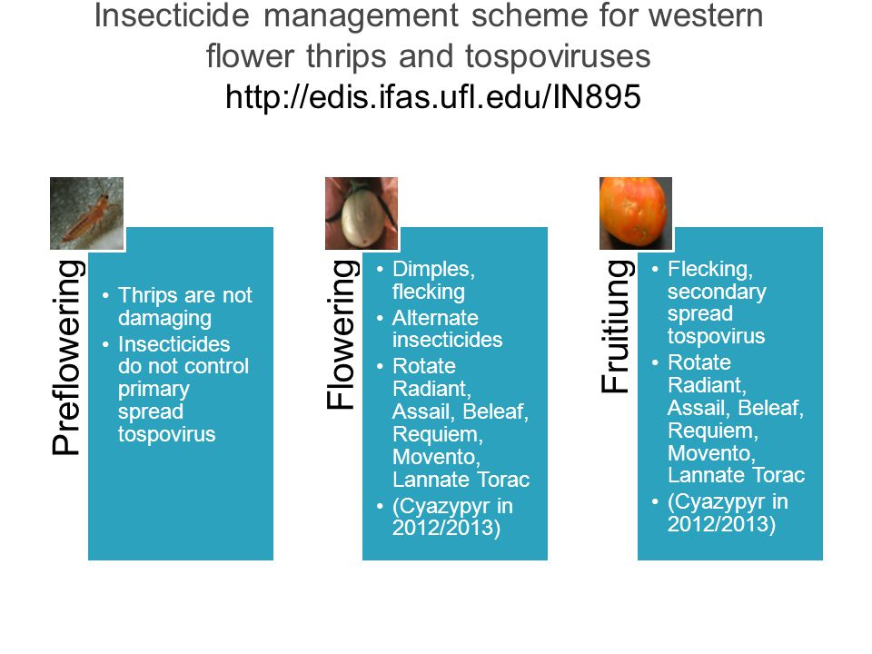 Insecticide management scheme for western flower thrips and tospoviruses http://edis.ifas.ufl.edu/IN895