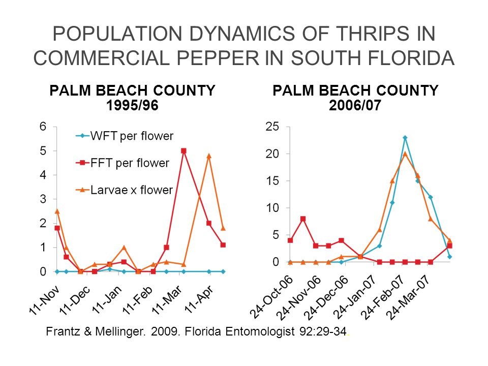 POPULATION DYNAMICS OF THRIPS IN COMMERCIAL PEPPER IN SOUTH FLORIDA