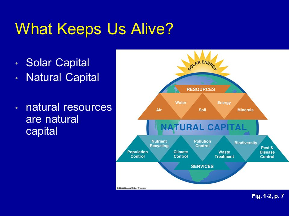 What Keeps Us Alive Solar Capital Natural Capital