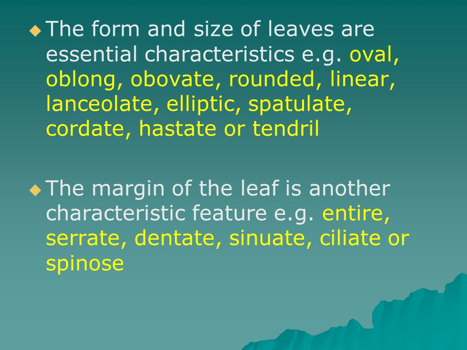 The form and size of leaves are essential characteristics e. g