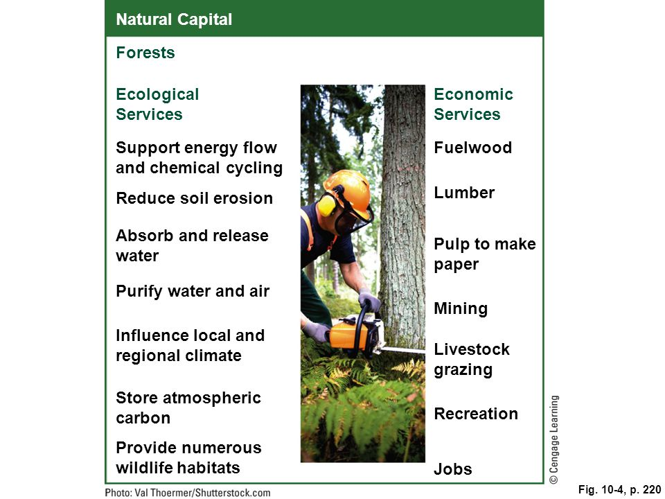 Support energy flow and chemical cycling Fuelwood