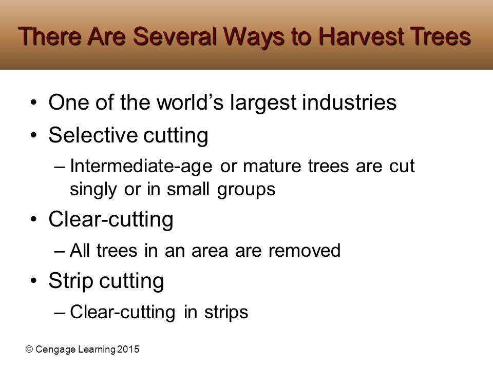 There Are Several Ways to Harvest Trees