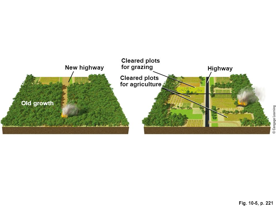 Cleared plots for grazing. New highway. Highway. Cleared plots. for agriculture. Old growth.