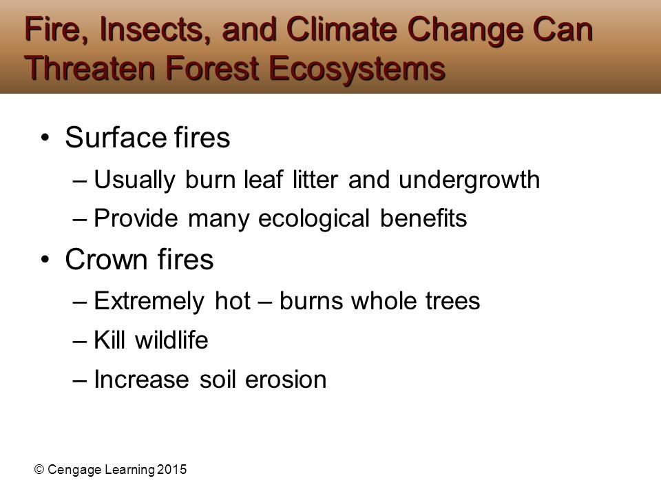 Fire, Insects, and Climate Change Can Threaten Forest Ecosystems