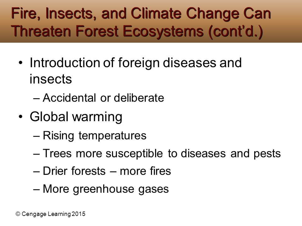 Fire, Insects, and Climate Change Can Threaten Forest Ecosystems (cont'd.)