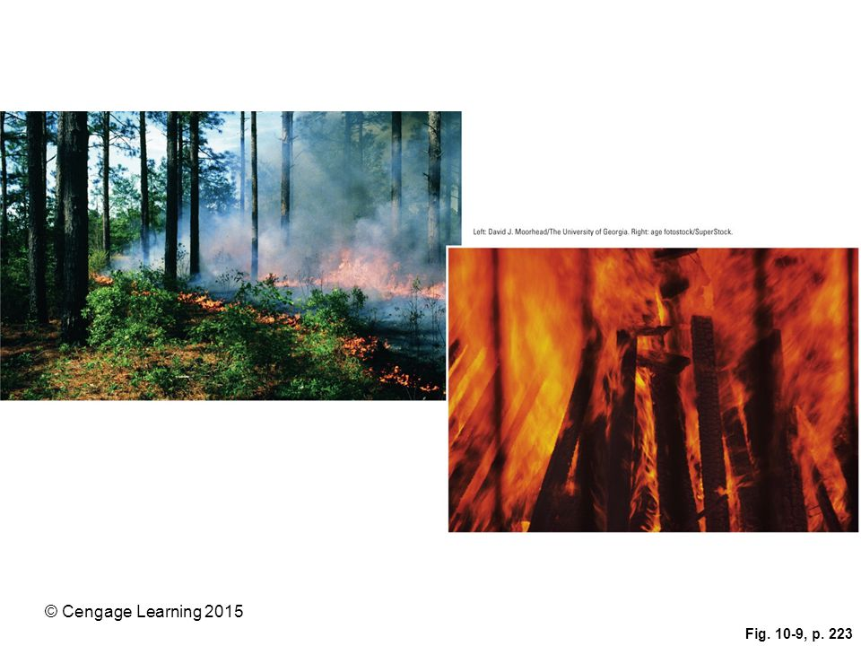 Figure 10.9: Surface fires (left) usually burn only undergrowth and leaf litter on a forest floor. They can help to prevent more destructive crown fires (right) by removing flammable ground material.