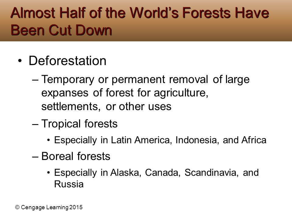 Almost Half of the World's Forests Have Been Cut Down