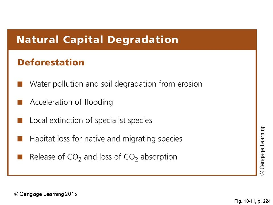 Figure 10-11: Deforestation has some harmful environmental effects that can reduce biodiversity and degrade the ecosystem services provided by forests (Figure 10-4, left).