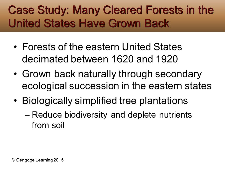 Case Study: Many Cleared Forests in the United States Have Grown Back
