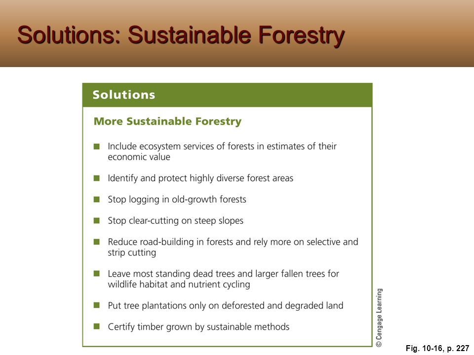 Solutions: Sustainable Forestry