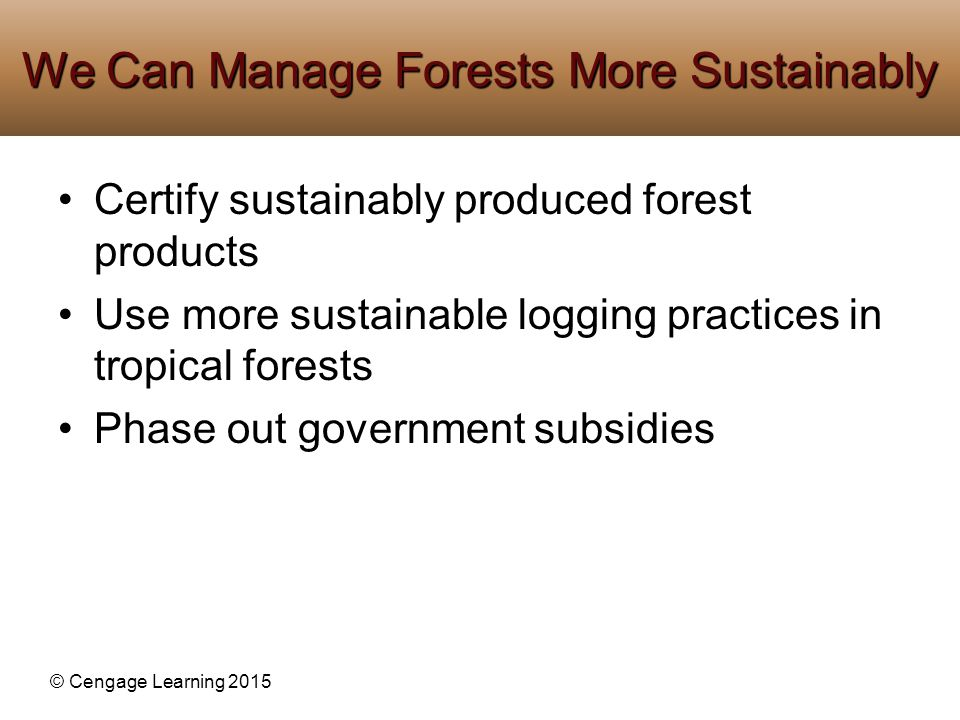 We Can Manage Forests More Sustainably