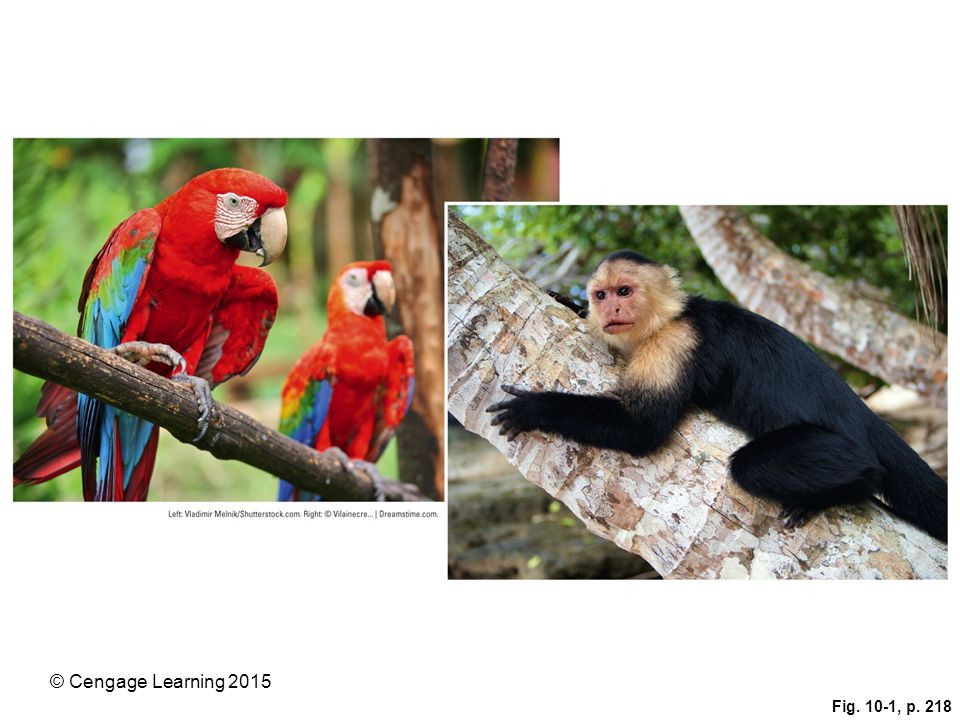Figure 10-1: Costa Rica is one of the world's most biologically rich places. Two of its half-million species are the scarlet macaw parrot (left) and the white-faced capuchin monkey (right).