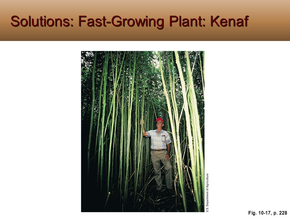 Solutions: Fast-Growing Plant: Kenaf