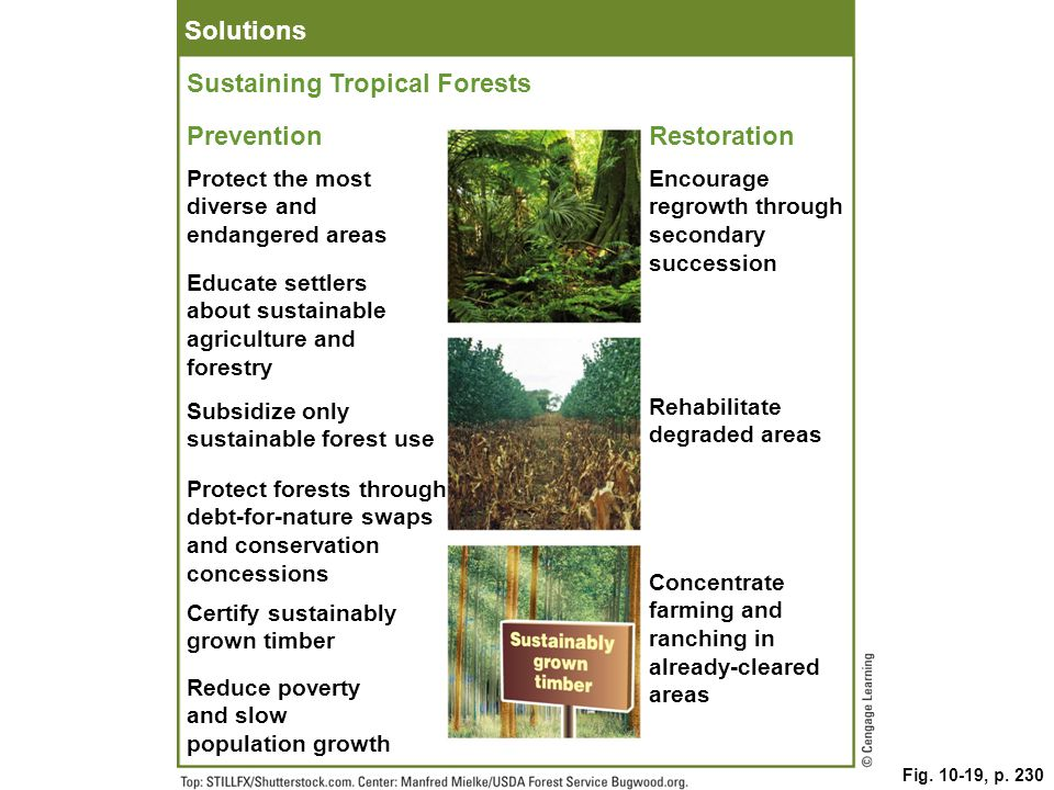 Sustaining Tropical Forests