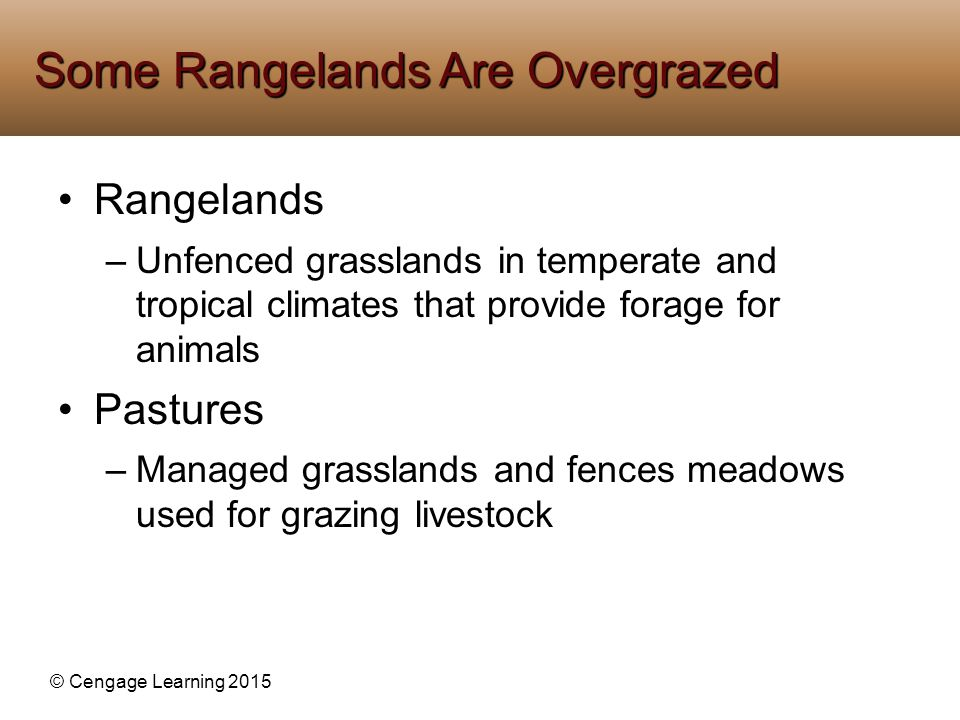 Some Rangelands Are Overgrazed