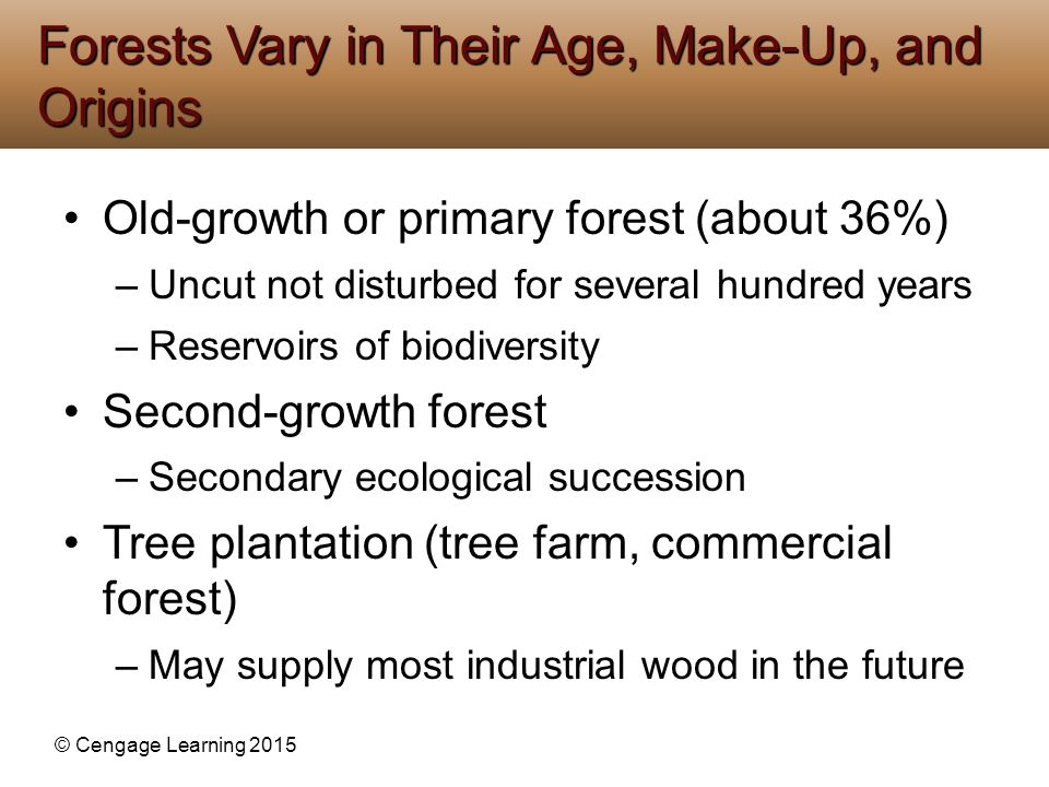 Forests Vary in Their Age, Make-Up, and Origins