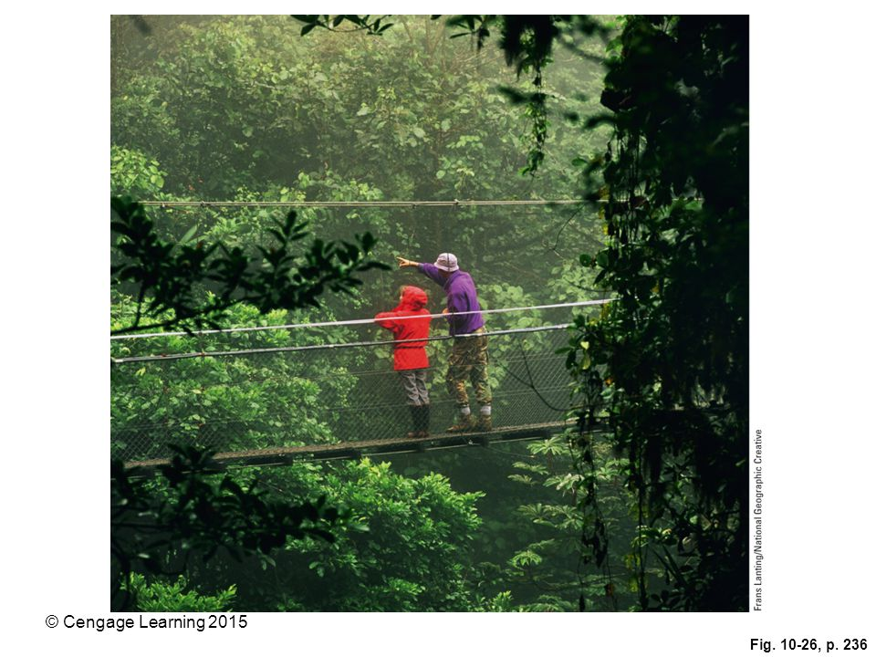 Figure 10-26: These tourists are exploring a forest canopy via a walkway in Costa Rica's Monteverde Cloud Forest Reserve.