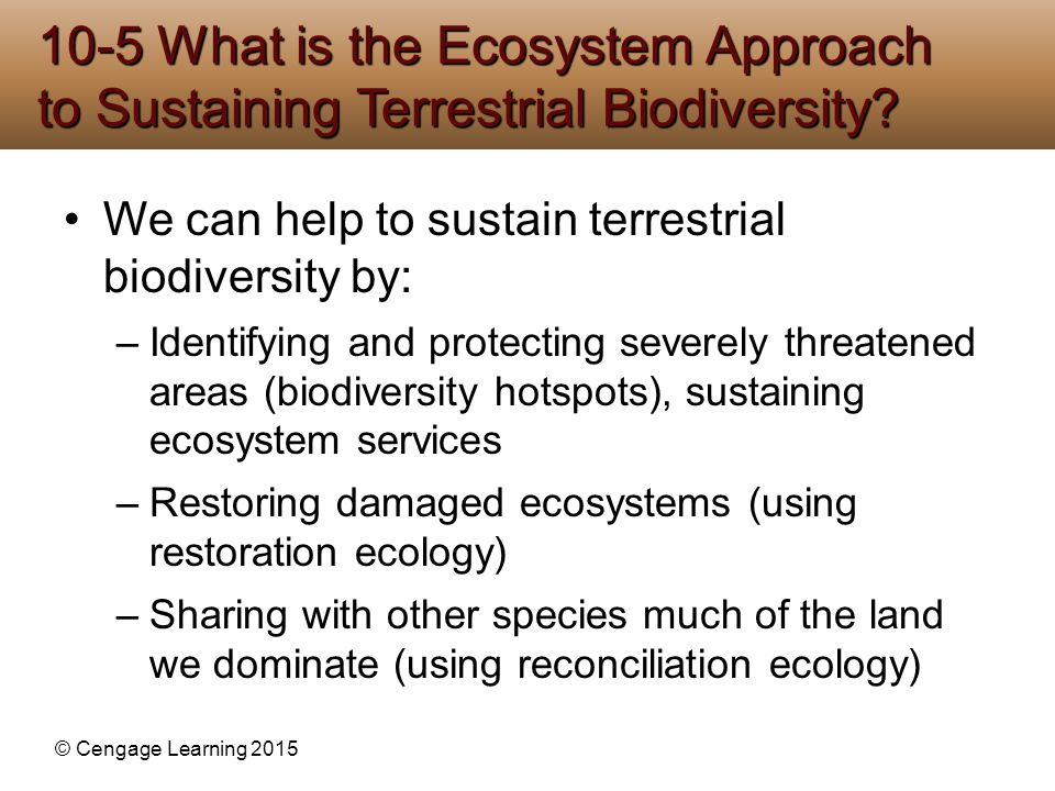10-5 What is the Ecosystem Approach to Sustaining Terrestrial Biodiversity