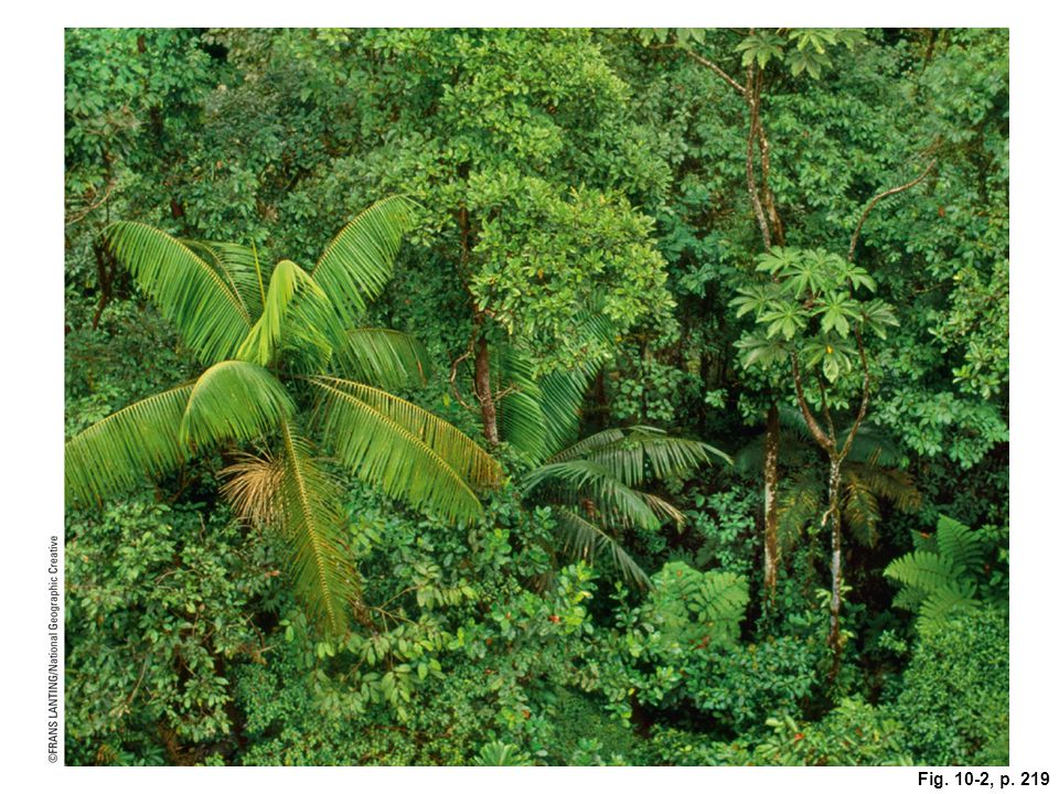 Figure 10-2: This protected old-growth rain forest at a high altitude in Monteverde, Costa Rica (Core Case Study), is home for a rich diversity of plant and animal species.