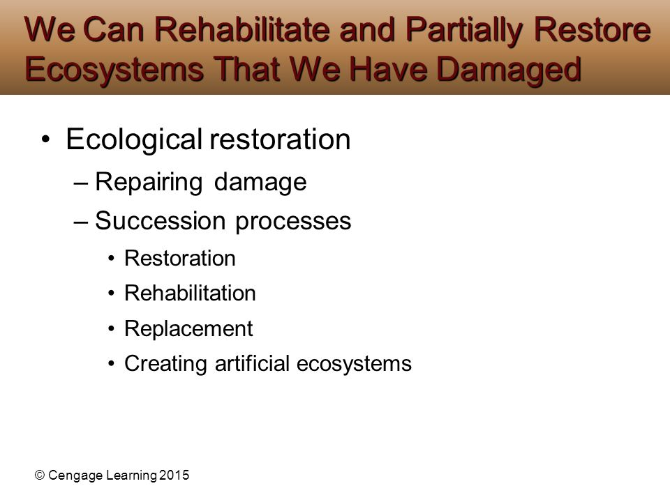 We Can Rehabilitate and Partially Restore Ecosystems That We Have Damaged