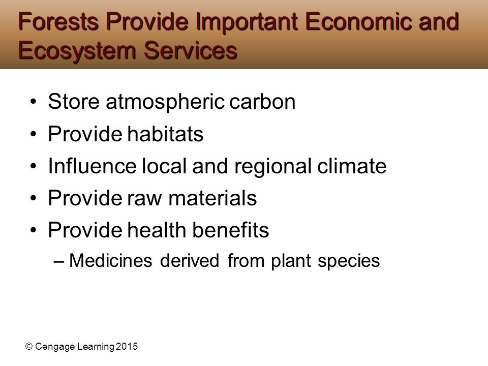Forests Provide Important Economic and Ecosystem Services