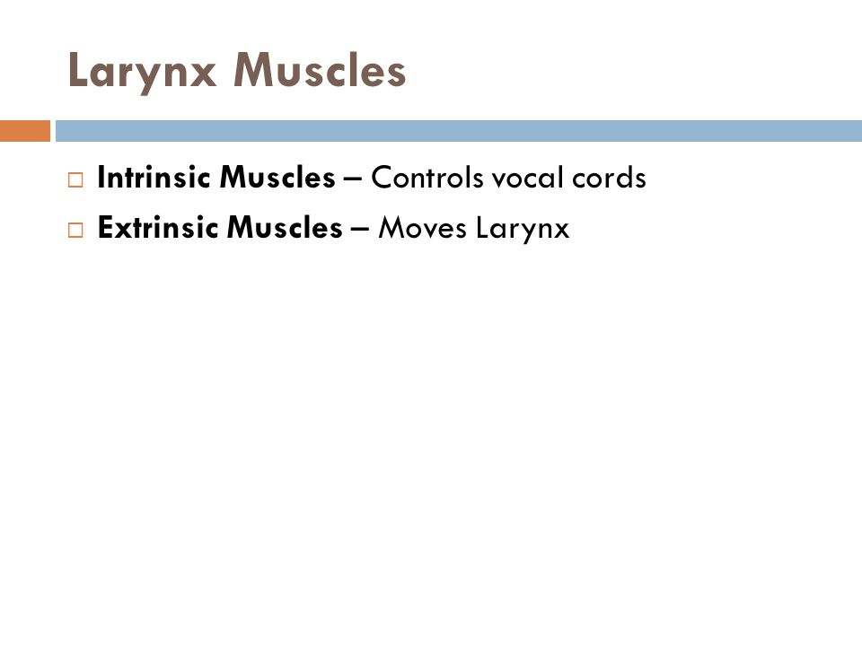 Larynx Muscles Intrinsic Muscles – Controls vocal cords