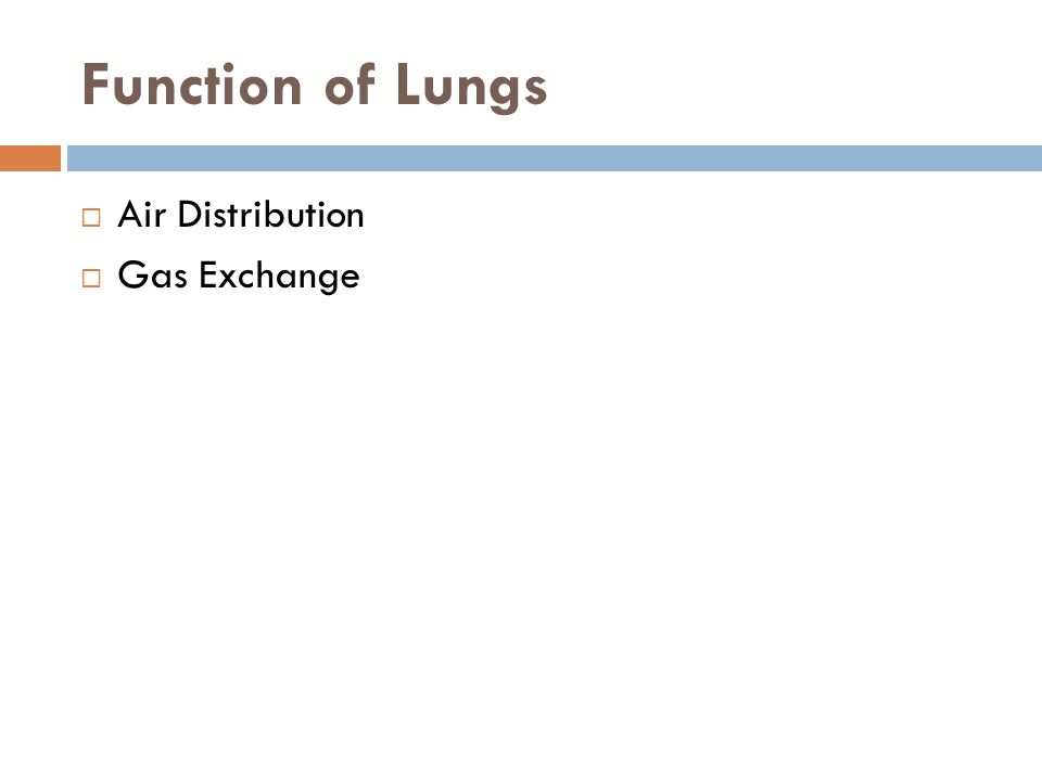 Function of Lungs Air Distribution Gas Exchange