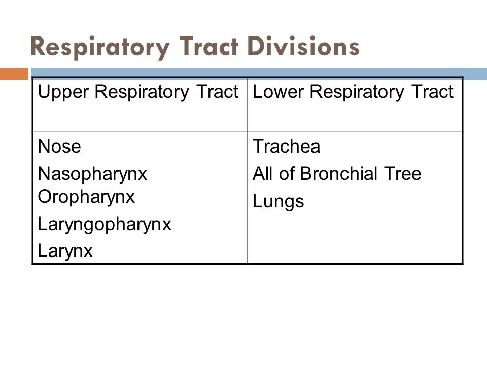 Respiratory Tract Divisions