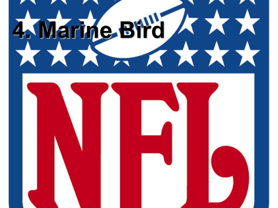 4. Marine Bird