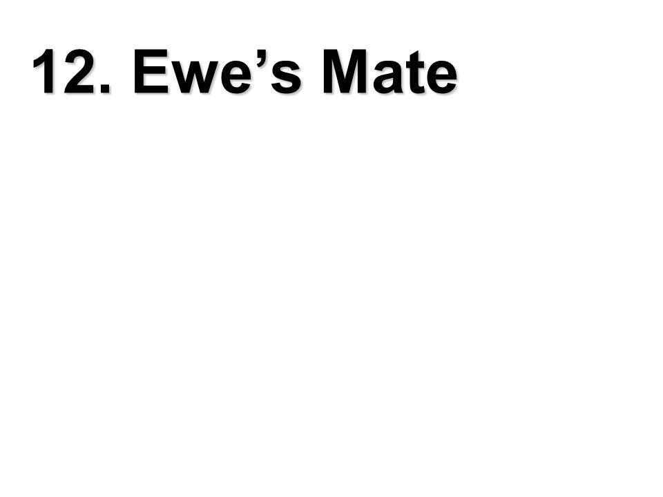 12. Ewe's Mate