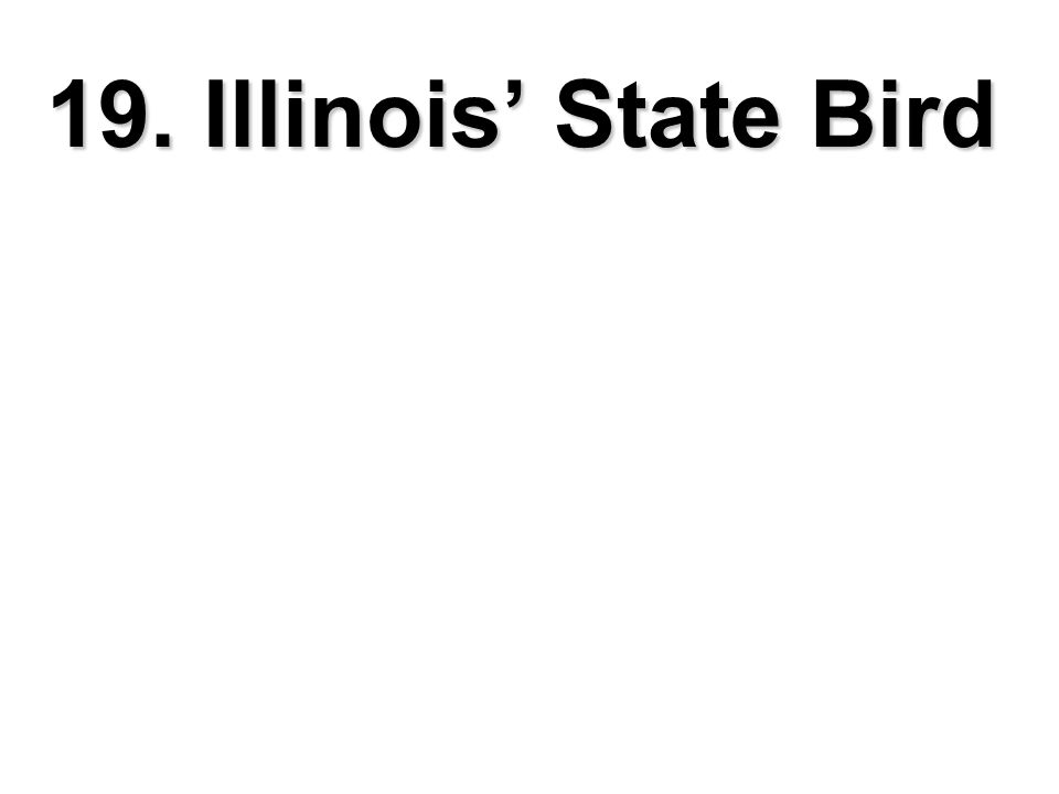19. Illinois' State Bird