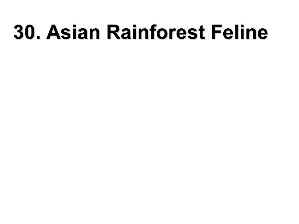 30. Asian Rainforest Feline