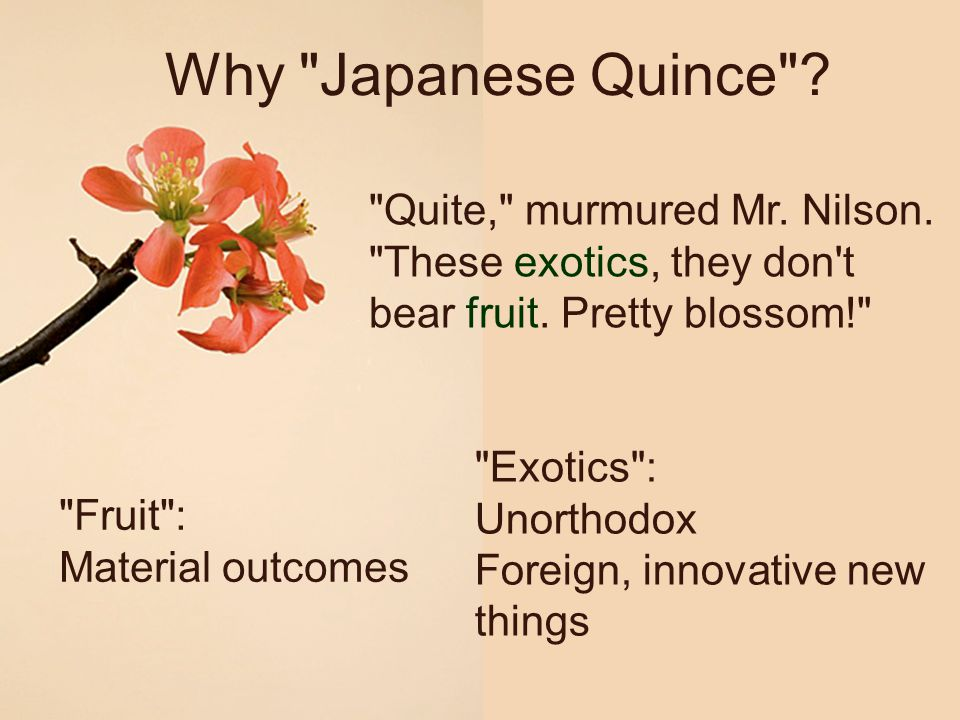 Why Japanese Quince Quite, murmured Mr. Nilson. These exotics, they don t bear fruit. Pretty blossom!