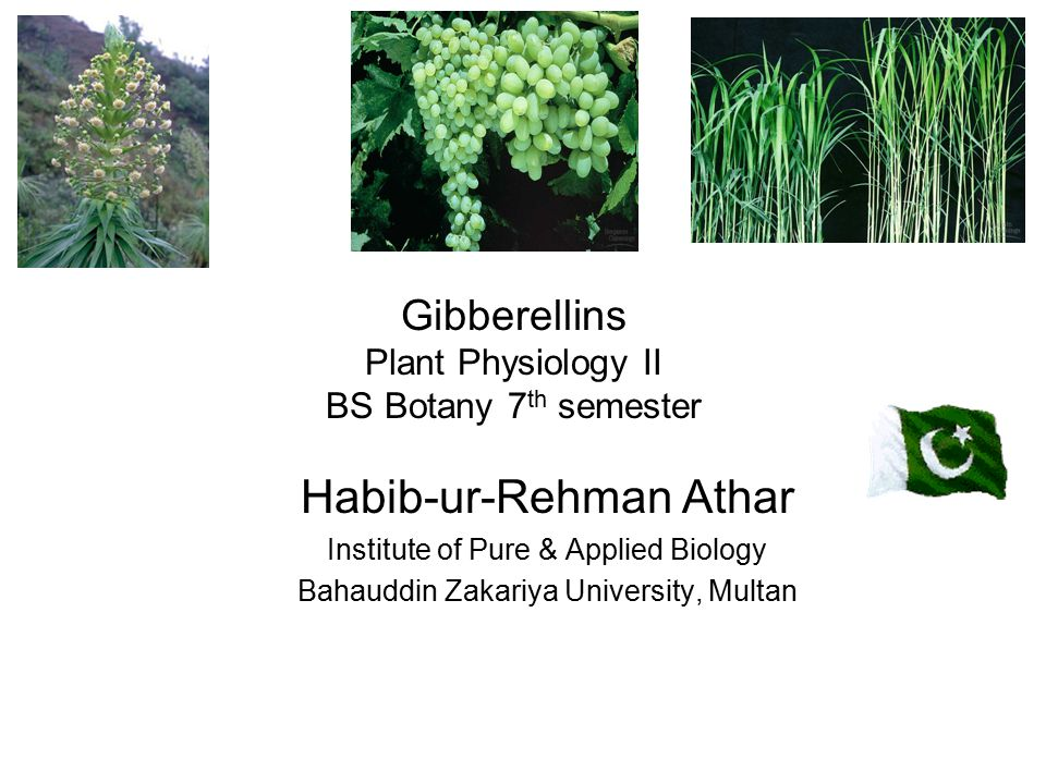 Gibberellins Plant Physiology II BS Botany 7th semester