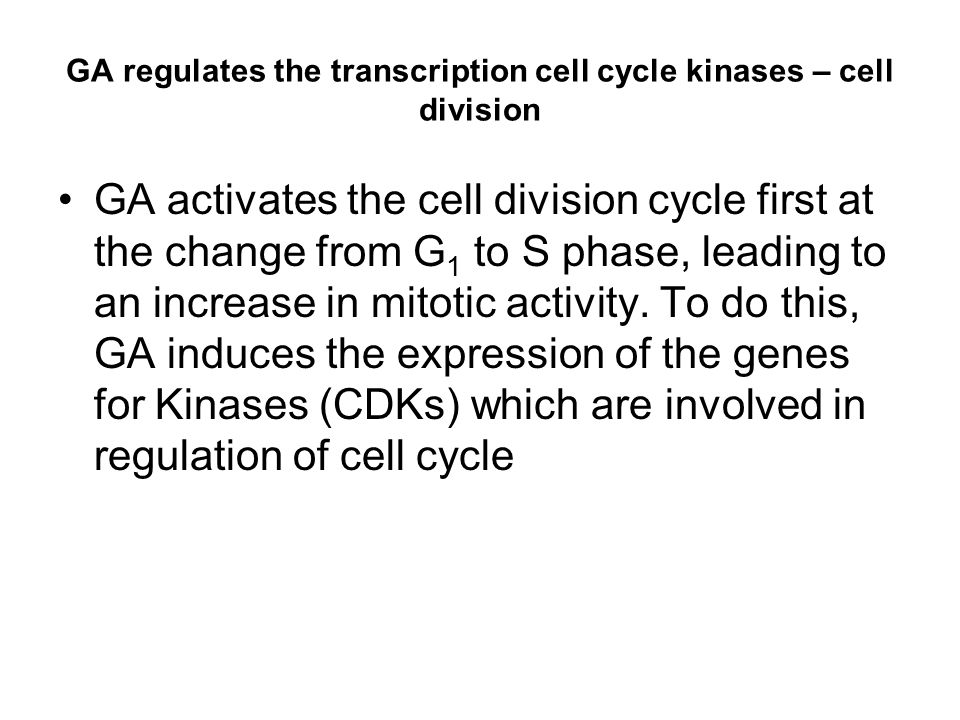 GA regulates the transcription cell cycle kinases – cell division
