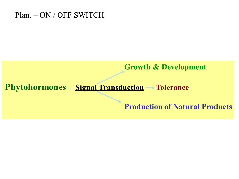 Phytohormones – Signal Transduction Tolerance