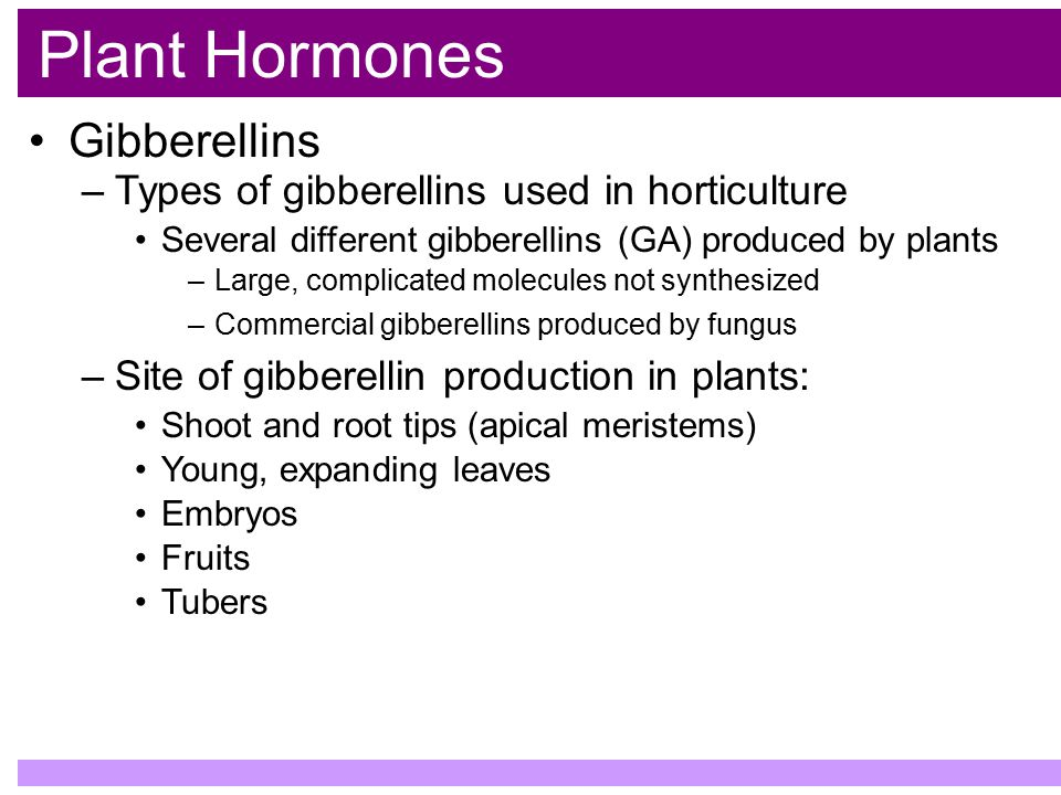 Plant Hormones Gibberellins Types of gibberellins used in horticulture