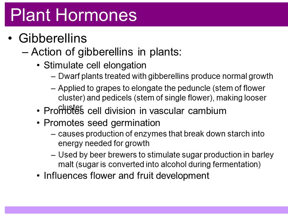 Plant Hormones Gibberellins Action of gibberellins in plants: