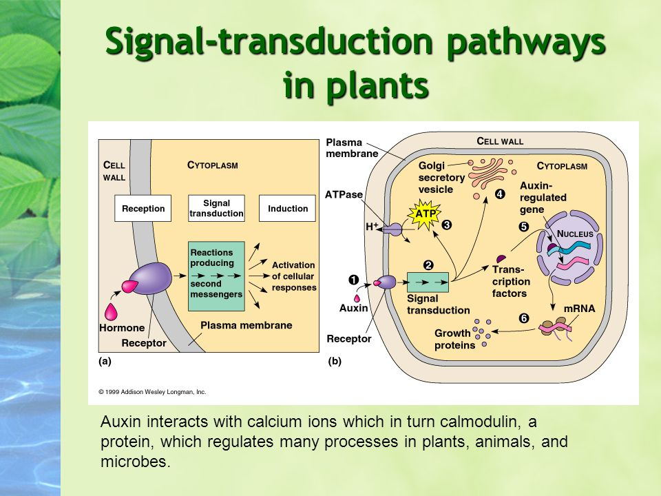 Signal-transduction pathways in plants