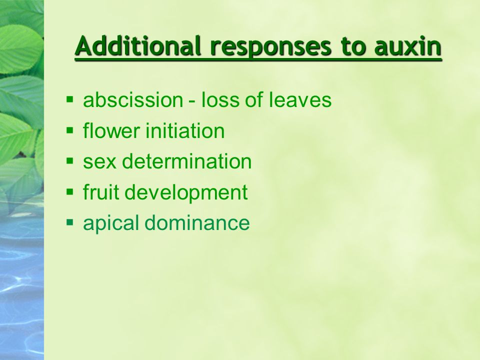 Additional responses to auxin