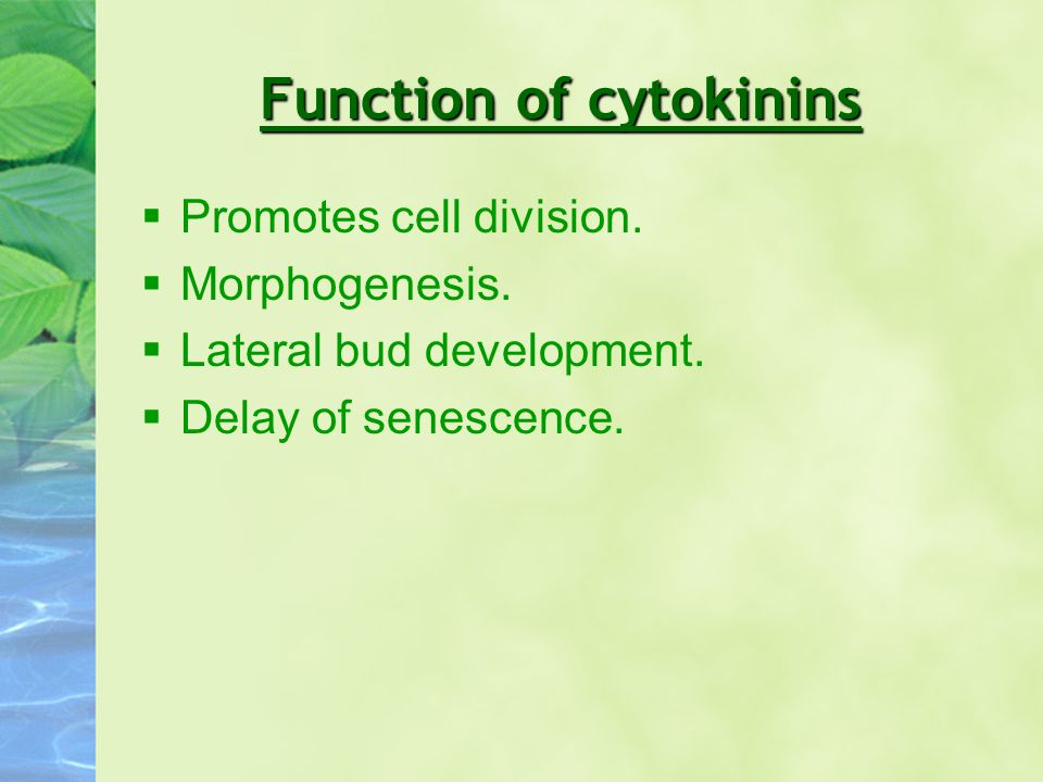 Function of cytokinins