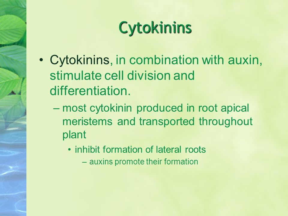 Cytokinins Cytokinins, in combination with auxin, stimulate cell division and differentiation.