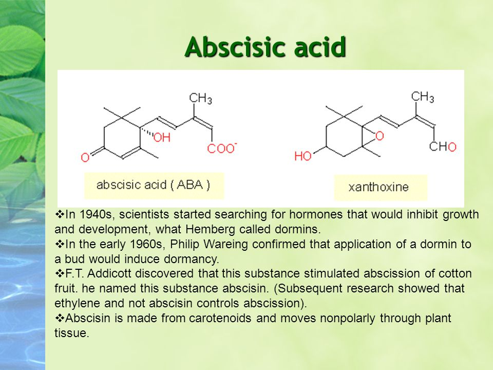 Abscisic acid In 1940s, scientists started searching for hormones that would inhibit growth and development, what Hemberg called dormins.