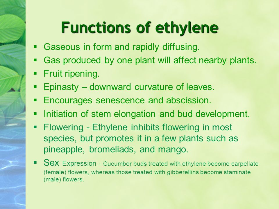 Functions of ethylene Gaseous in form and rapidly diffusing.